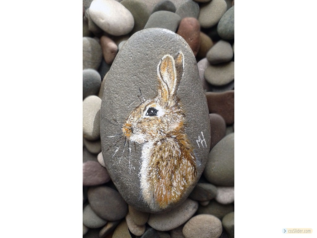 Brown Hare On Pebble
