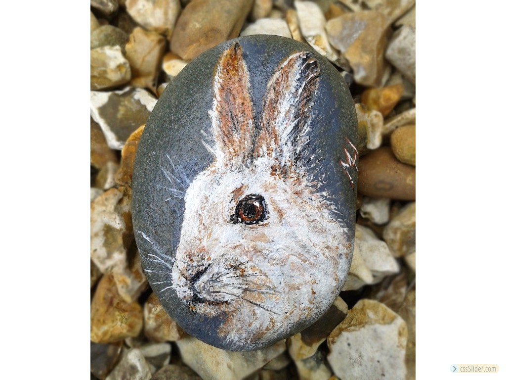 Mountain Hare On Pebble